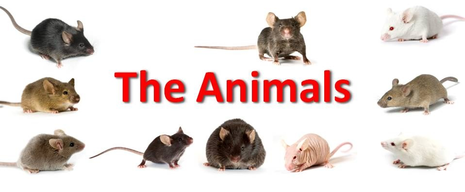 http://www.lasam.org.my/news/the-animals